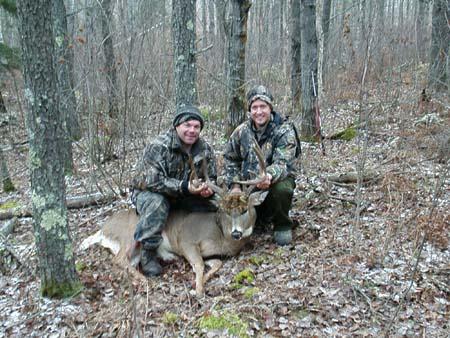 Deer 2 024