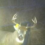 buck fever 3