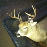 buck fever 4